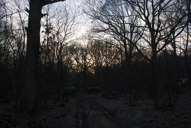 DSC_5525 sunrise in the woods