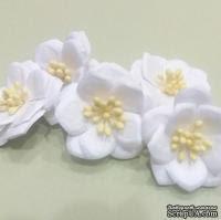 Магнолии от Scrap Klumba, белые,   5 шт., диаметр 4 см - ScrapUA.com