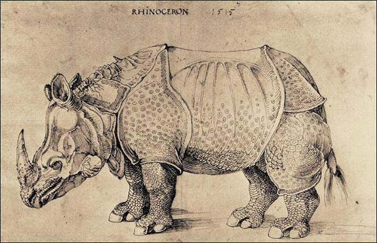 The rhinoceros of Dürer, drawing, 1515