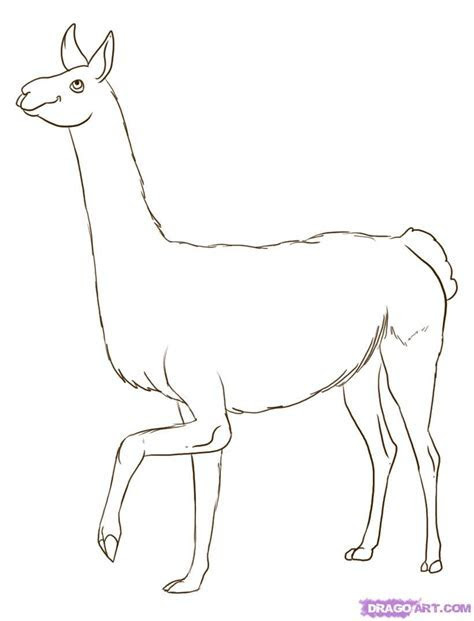 How to Draw a Llama, Step by Step, Farm animals, Animals, FR    Polyvore