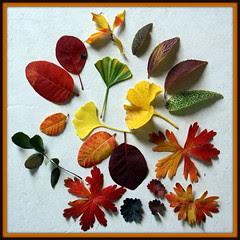 leaf sets 067-003