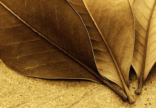 hojas muertas