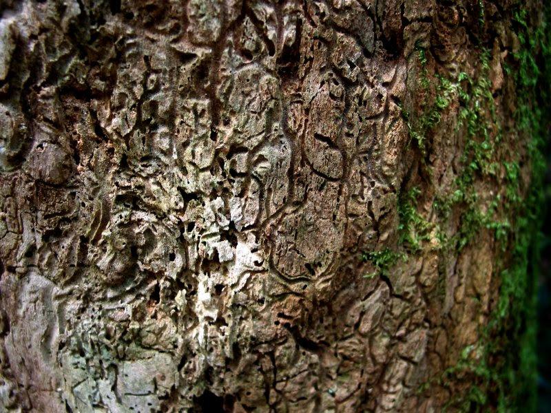 ant tree