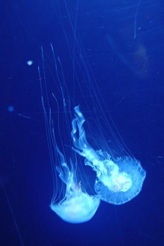 04-More Jellyfish