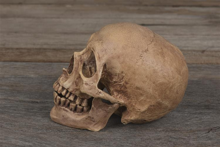 Esqueletos de 200 soldados de Napoleão encontrados na Alemanha