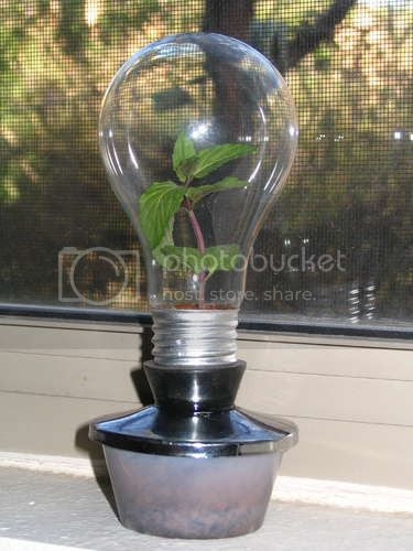 lightbulb plant