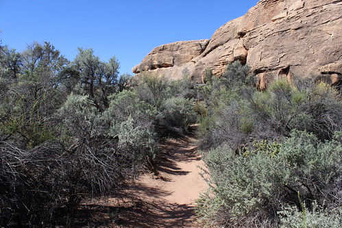 IMG_2653_Cave_Spring_Trail