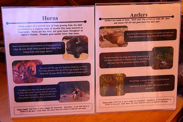 IMG_3806 Antler vs Horn