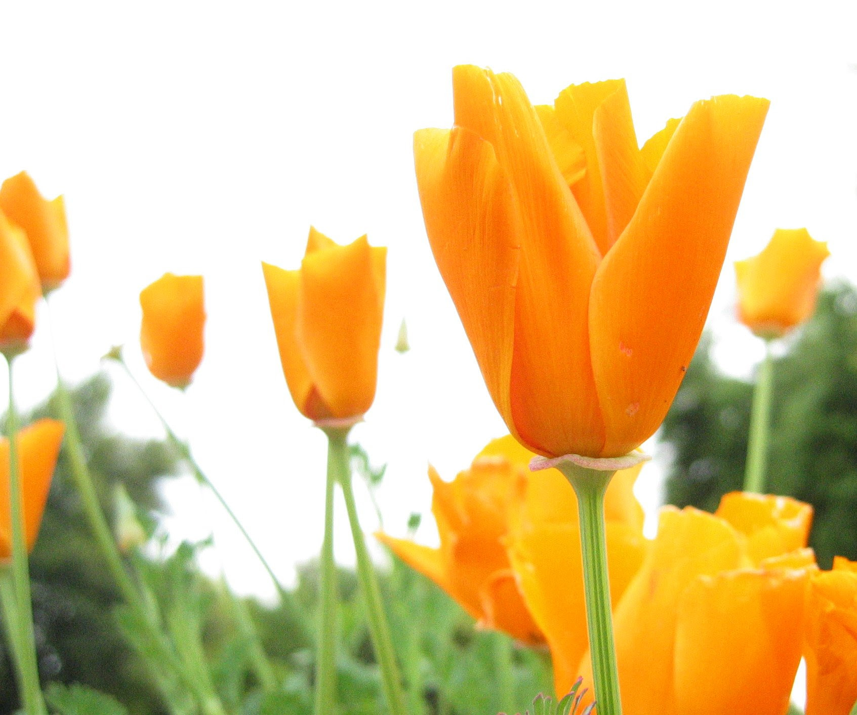 Click Here for Flower