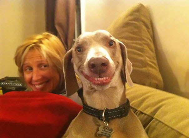 25 animais sorridentes que irão te fazer sorrir