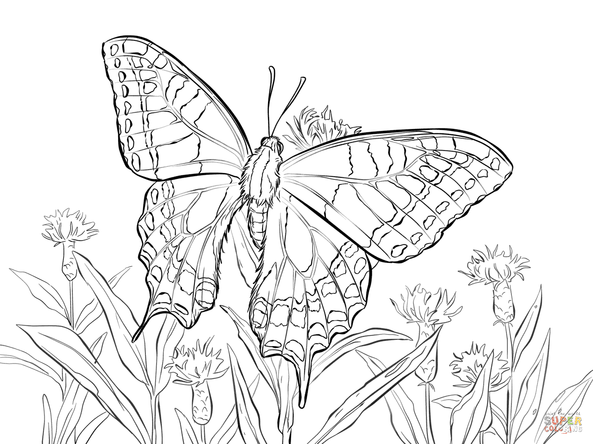 Schwalbenschwanz · Blauer Morphofalter from Schmetterling
