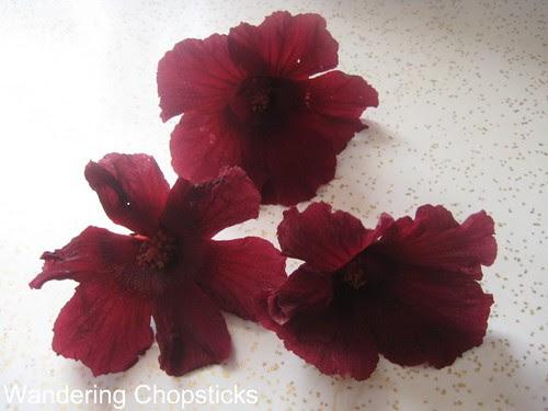 Jungle Red Hibiscus 2