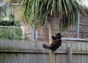 swinging-on-a-palm-tree-cat