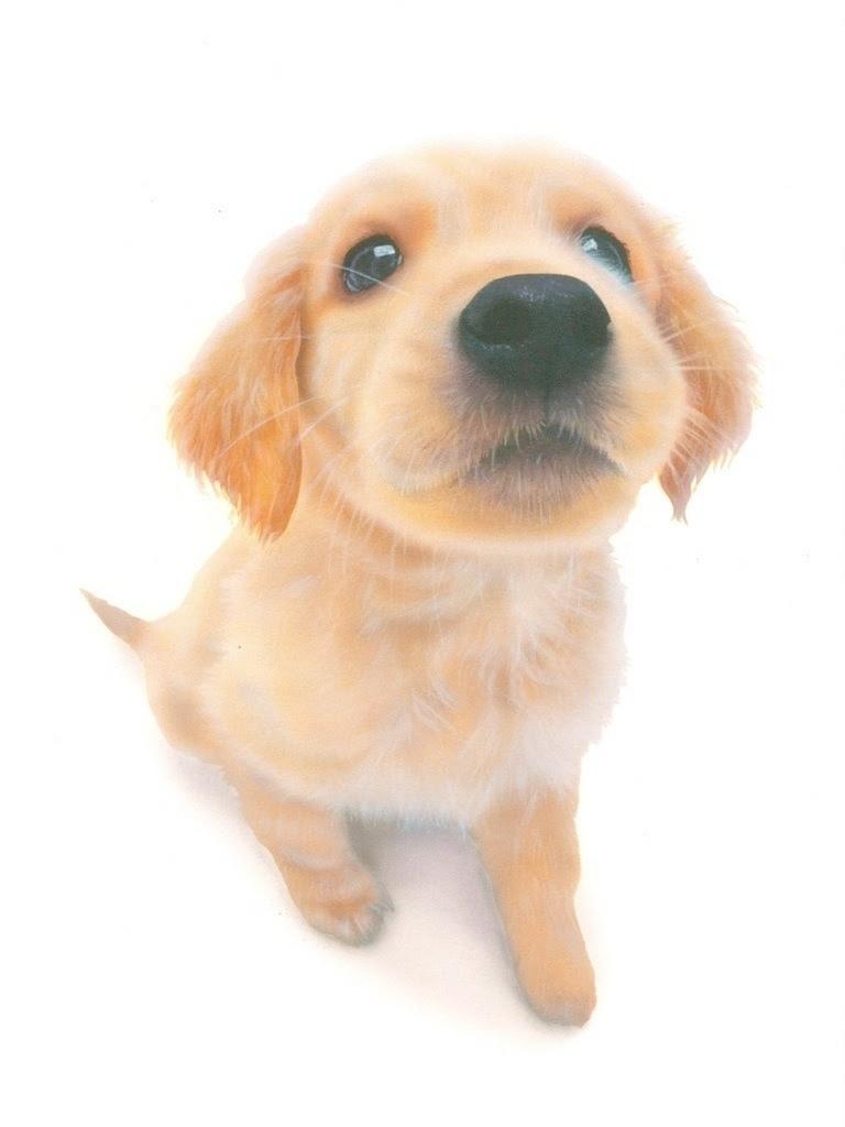 リアリズム絵画動物の絵動物イラスト子犬の絵ゴールデン