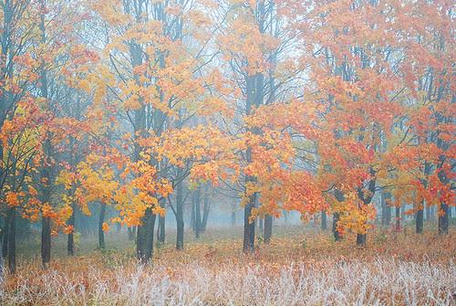 rudeninė sonata