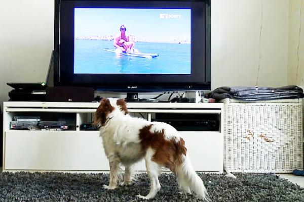 perierga.gr - Το πρώτο τηλεοπτικό κανάλι για σκύλους είναι γεγονός!