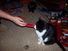 Hey, kitty crack!