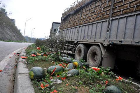 dưa hấu Tân Thanh, nông dân, sản xuất nông nghiệp, biệt thự, nhà tranh, bệnh thành tích, xuất khẩu nông sản, được mùa mất giá