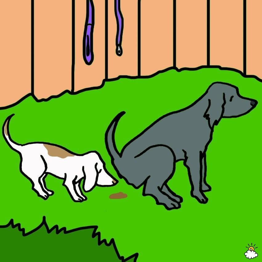 σκυλιά μασάνε εσώρουχα σκυλιά μασάνε εσώρουχα