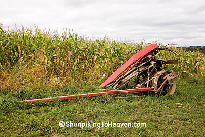Horse Drawn Corn Binder for Amish Corn Harvest, Vernon County, Wisconsin