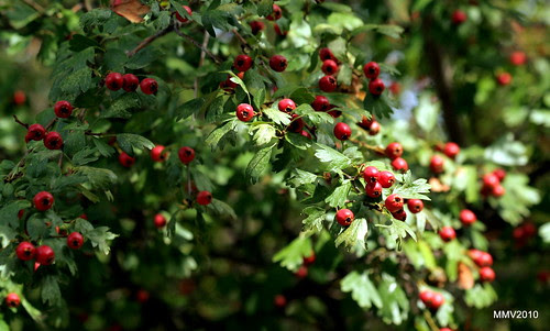 plantas, flores o frutos 3119x1876
