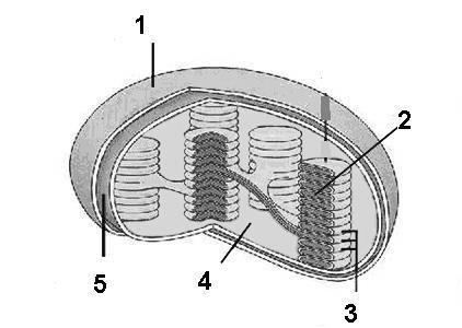 Soal Mitokondria Guru Ilmu Sosial