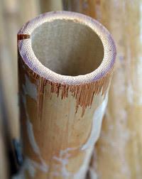 Bamboo_empty