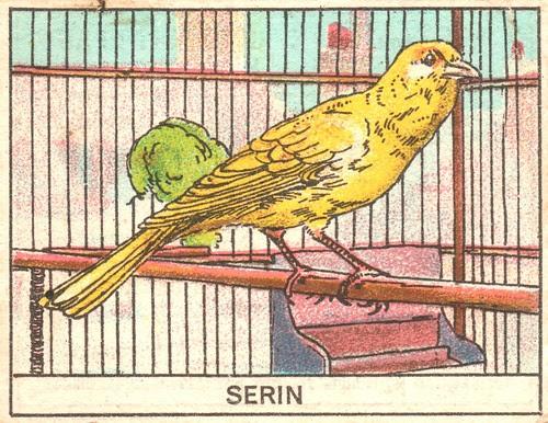 oiseaux mart 4