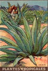 pl tropic 4