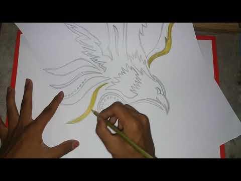 420+ Foto Gambar Burung Elang Pensil HD Terbaru Free