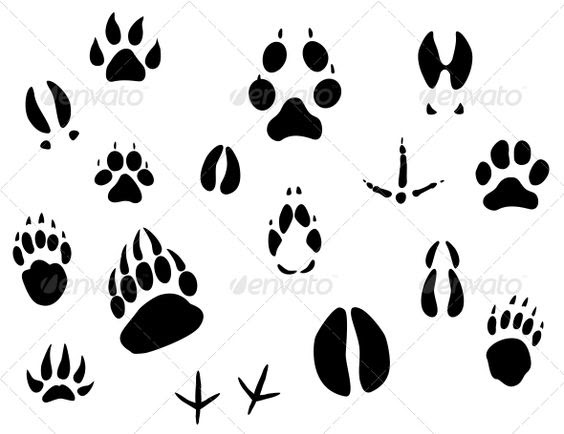 Animal Footprints   Editor, Ecology design and Food labels