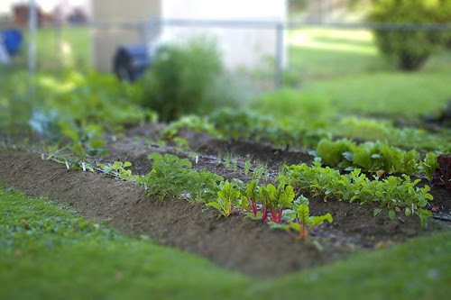 tilt shift garden