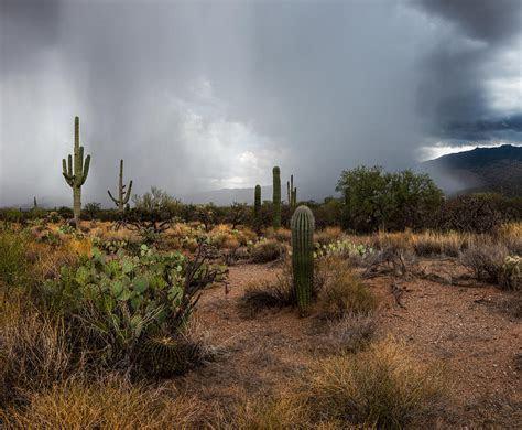 Desert Rain Photograph by Art Morgan