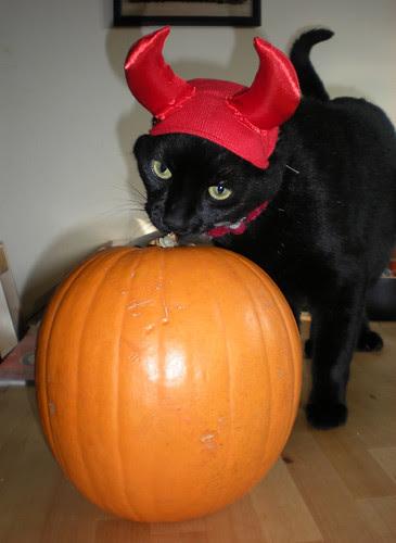Devil Kitty!