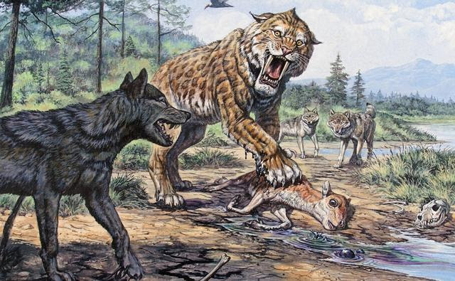http://ichef.bbci.co.uk/naturelibrary/images/ic/credit/640x395/d/di/dire_wolf/dire_wolf_1.jpg