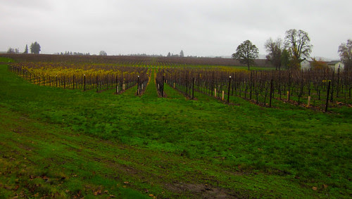 Vineyard, almost to the southern terminus of Howell Prairie Rd