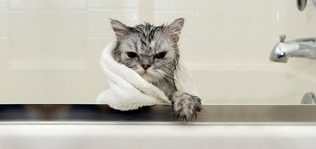 Fotografias engraçadas de gatos tomando banho 10