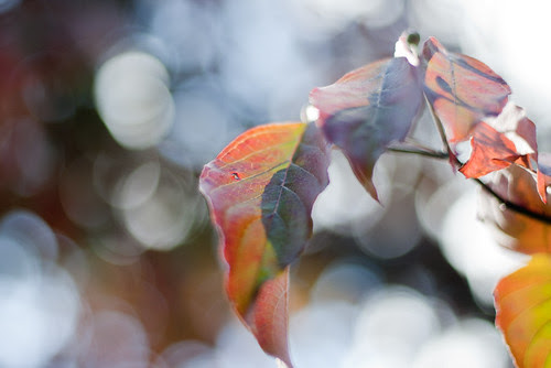 Leaves by Maggie Stein
