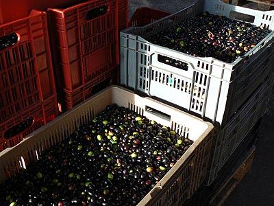 caisses d'olives.jpg