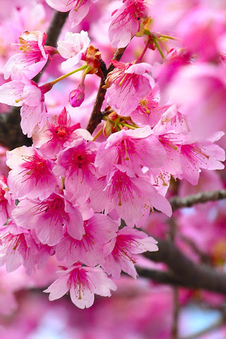Hermosas Flores Para Iphone Fondos De Pantalla Para Celular