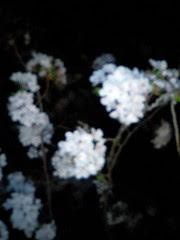 午前二時の花見1