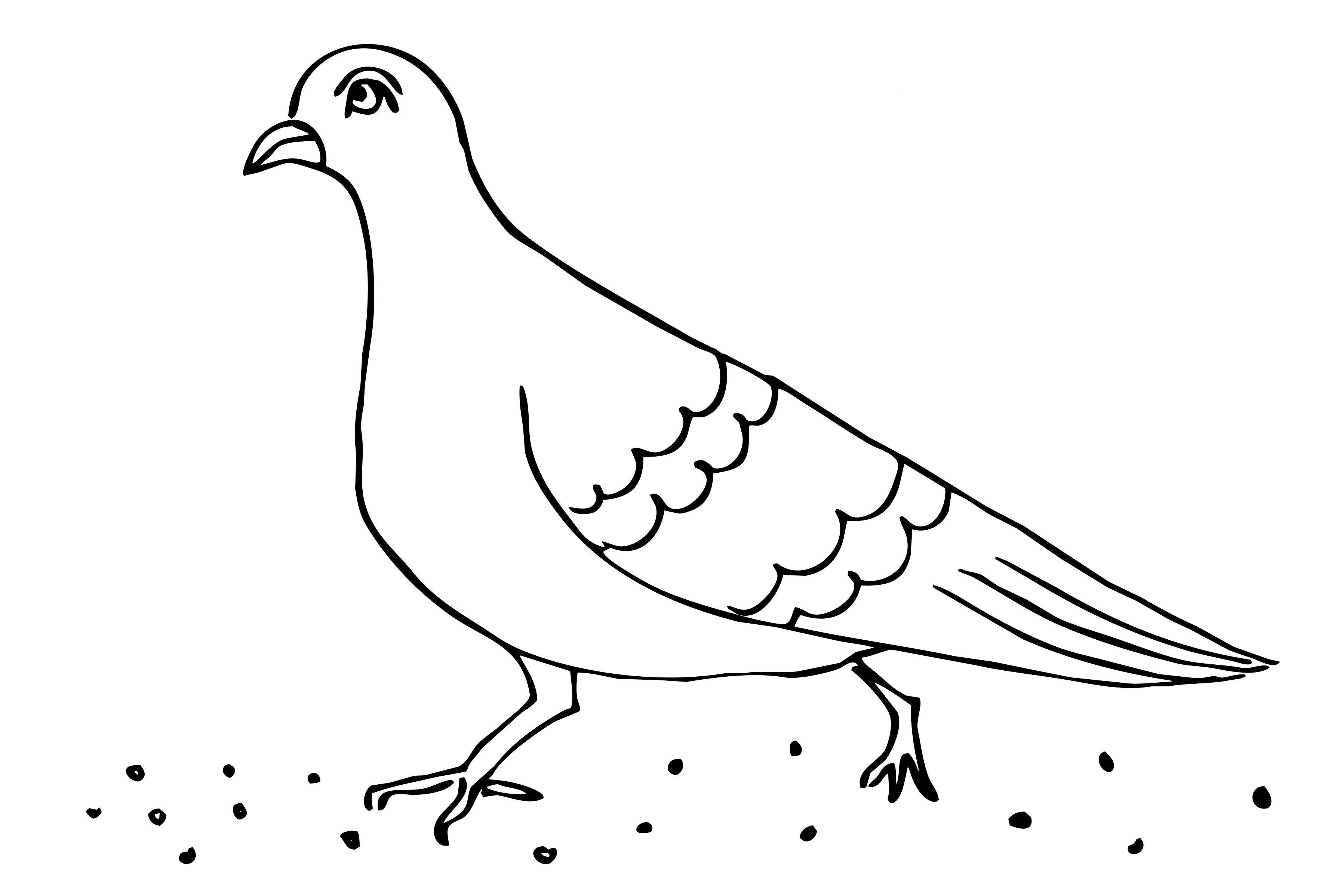 Genial Ausmalbilder Tauben Kostenlos