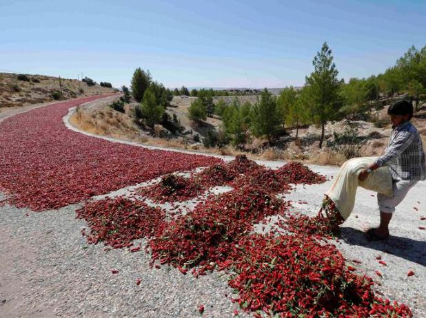 Okkes Sahin lays hot peppers out on a road to dry under the sun in Kilis