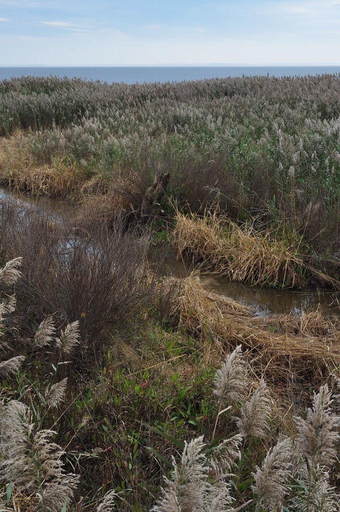 Creek to Fossil Beach 8