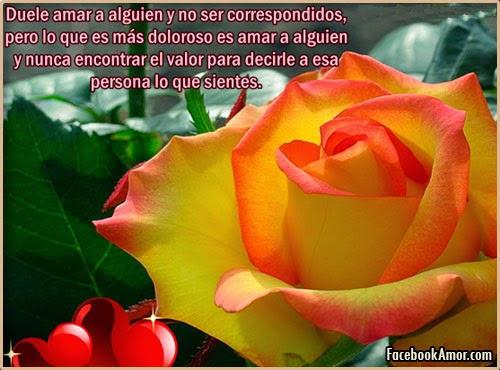 Fotos Rosas Bonitas Fotos Gratis Ptalo Amor Rosado Plantas Flores