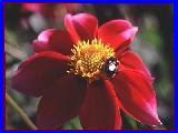 http://www.psyche.gr/imflower4.jpg