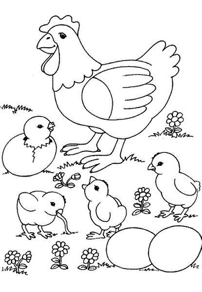 tavuk civciv boyama sayfalari okul ev etkinlikleri okul