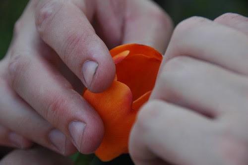 Blog Widow eats a Tulip