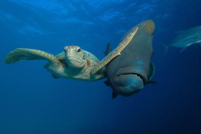 """Ganador de la categoría Bajo el mar: """"Bofetada"""", Troy Maine"""