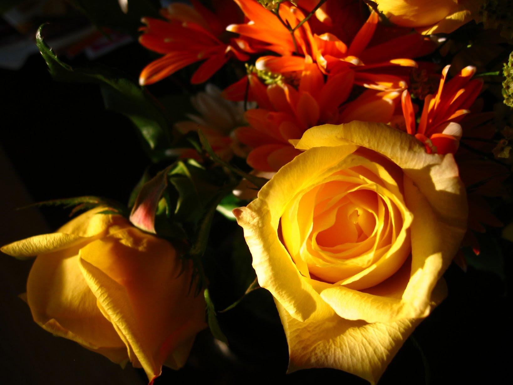 flower -- soul-amp.com